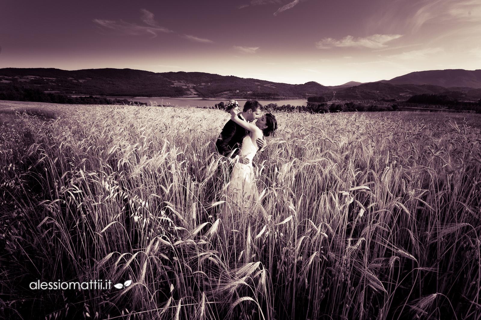 fotografia reportage matrimonio Firenze bacio nel campo di grano